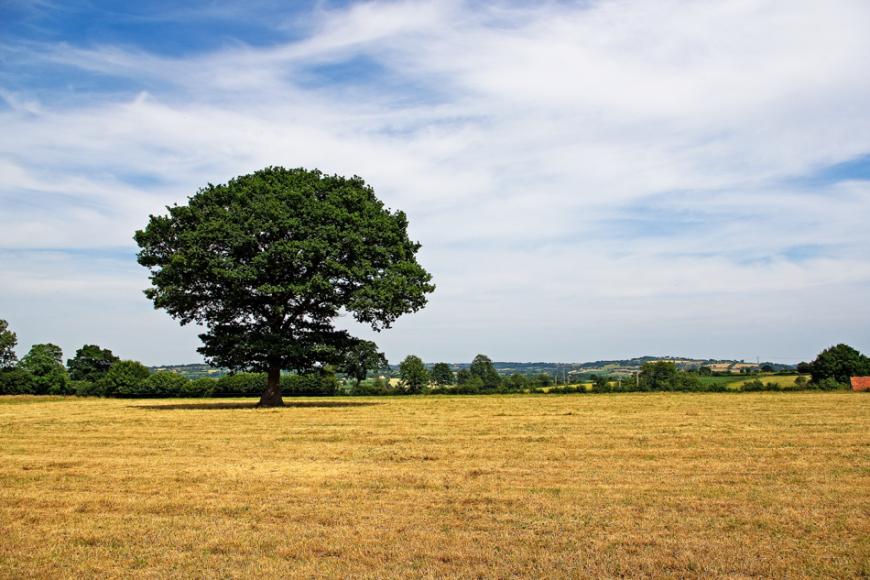 Le Buisson, à proximité du bourg de Tessy-sur-Vire