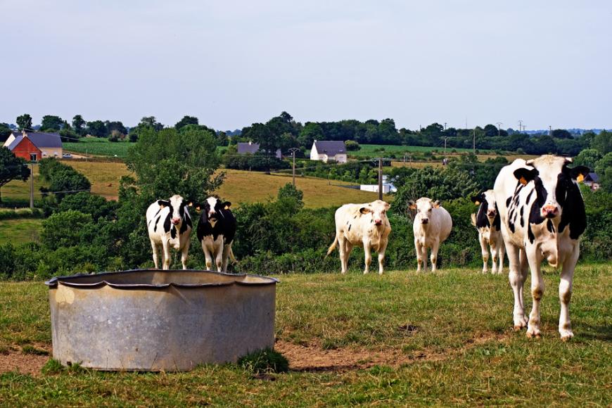 Les Longs Champs, à proximité du bourg de Tessy-sur-Vire